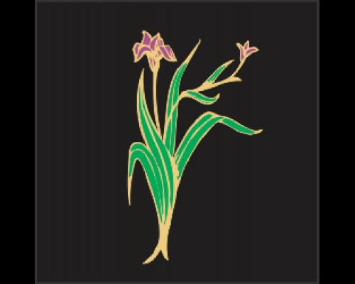 Coloured Motif - Iris